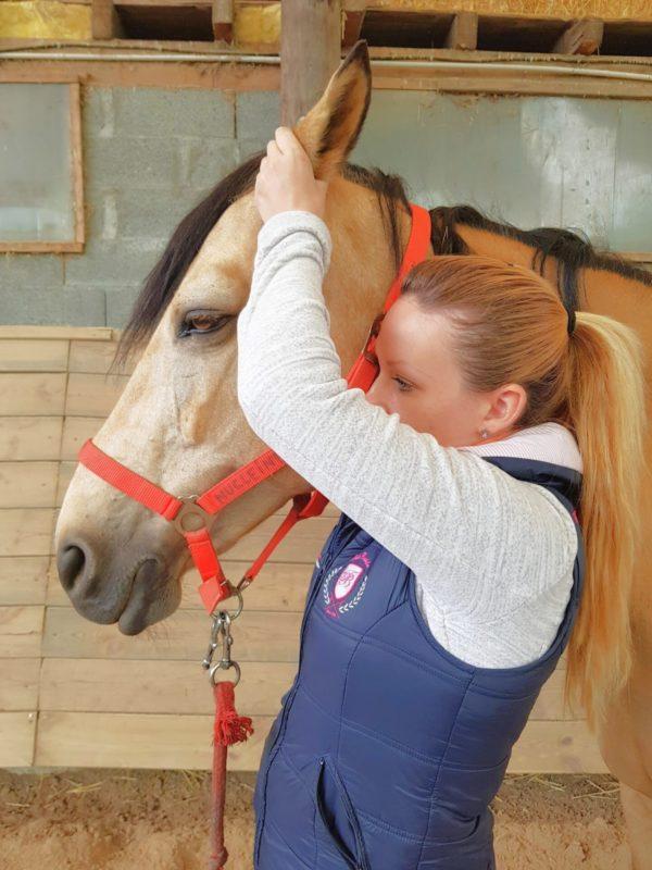 motifs-consultation-cheval-signes&maux