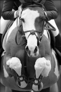 Animal-de-sport-période-vie-cheval--motifs-consultation-cheval