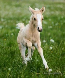 cheval-nouveaune-période-vie-cheval-motifs-consultation-cheval