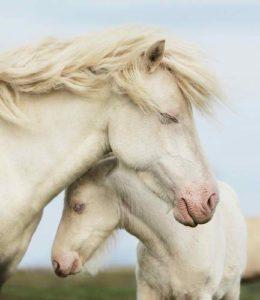 femelle-gestante-période-vie-cheval-motifs-consultation-cheval