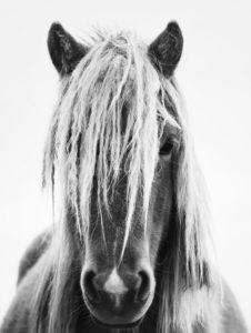 jeune-animal-période-vie-cheval-motifs-consultation-cheval