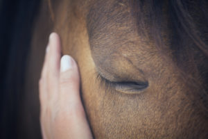 Main cheval- ostéopathie cranio-sacrée