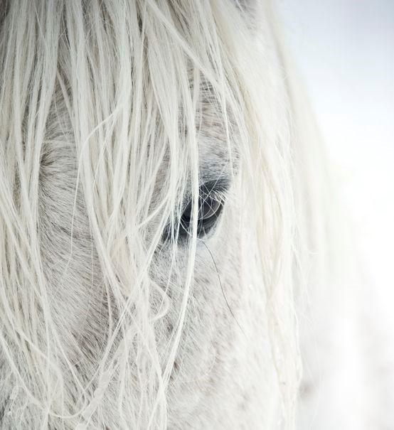 visite préventive cheval osteopathie équine